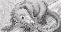 Cifelliodon wahkarmoosuch