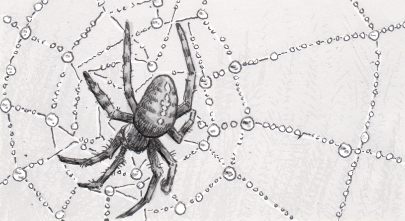 Study of spiderwebs finds how to stay sticky when a surface is wet