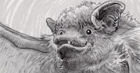Hoary bat relying on micro-calls