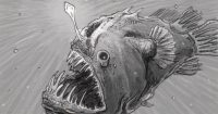Drawing of a female anglerfish