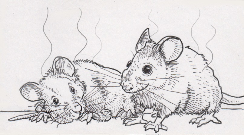 Smelly sick and healthy mice