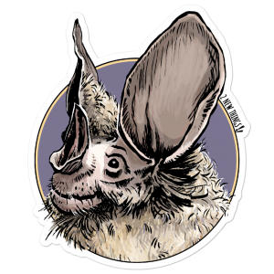 Woolly False Vampire Bat vinyl sticker
