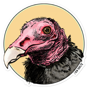 Turkey Vulture Vinyl Sticker