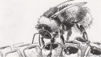 Drawing of a bumblebee regurgitating nectar for larvae