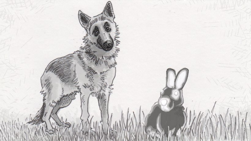 A German shepard ponders the body heat signature of a rabbit